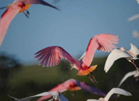 Aves en el este <br />La pasión por mirar