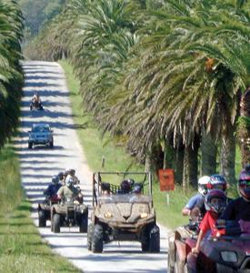 Excursión de cuatriciclos en ruta de palmeras