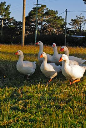 En Lomas de San Vicente, tuvimos en cuenta la creación de un microclima para tener un ambiente adecuado para las aves de la zona