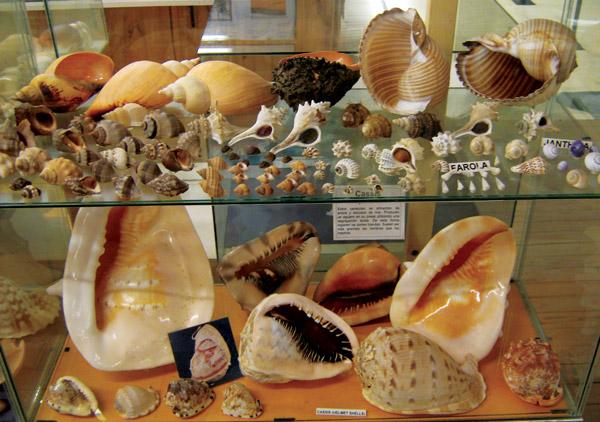 En el Museo del Mar, se pueden encontrar grandes exposiciones de caracoles entre otras