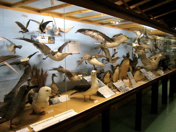 Museo del Mar - Muestra de variedad de especies de aves