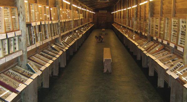 Insectarium, donde expone una de las colecciones más interesantes del Uruguay