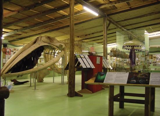 Museo del Mar <br />Para visitar todo el año