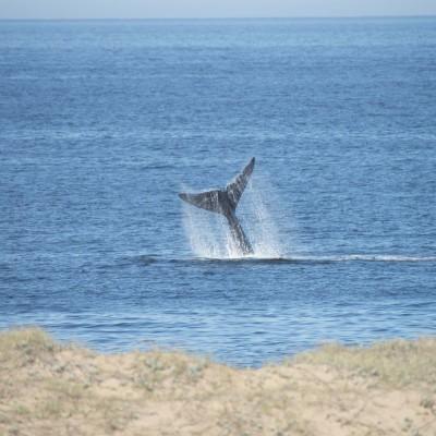 El ritual de las ballenas