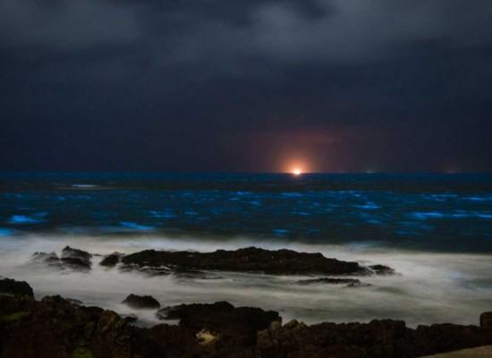 Luz propia en el mar de Rocha y Maldonado.