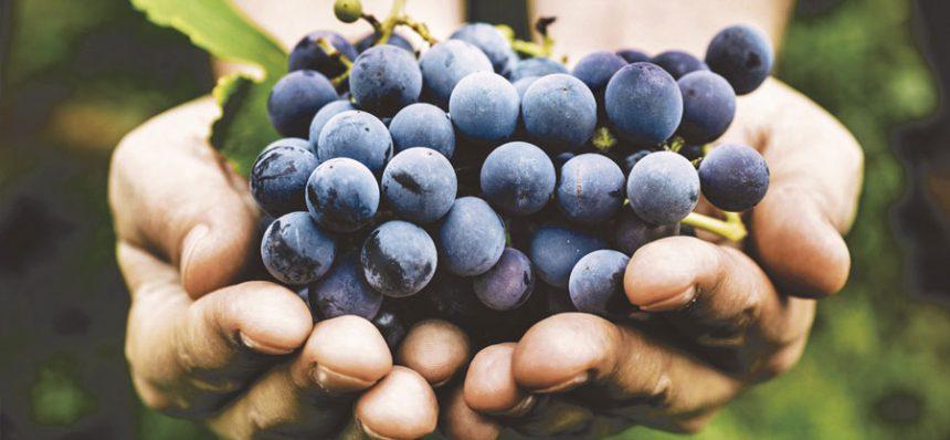 inavi-uva