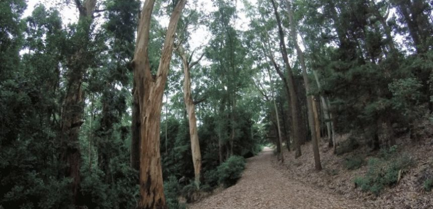 Un paseo por Arboretum Lussich, un gran bosque de abundante vegetación autóctona...