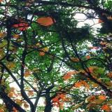 Arboretum Lussich tendrá su jardín botánico