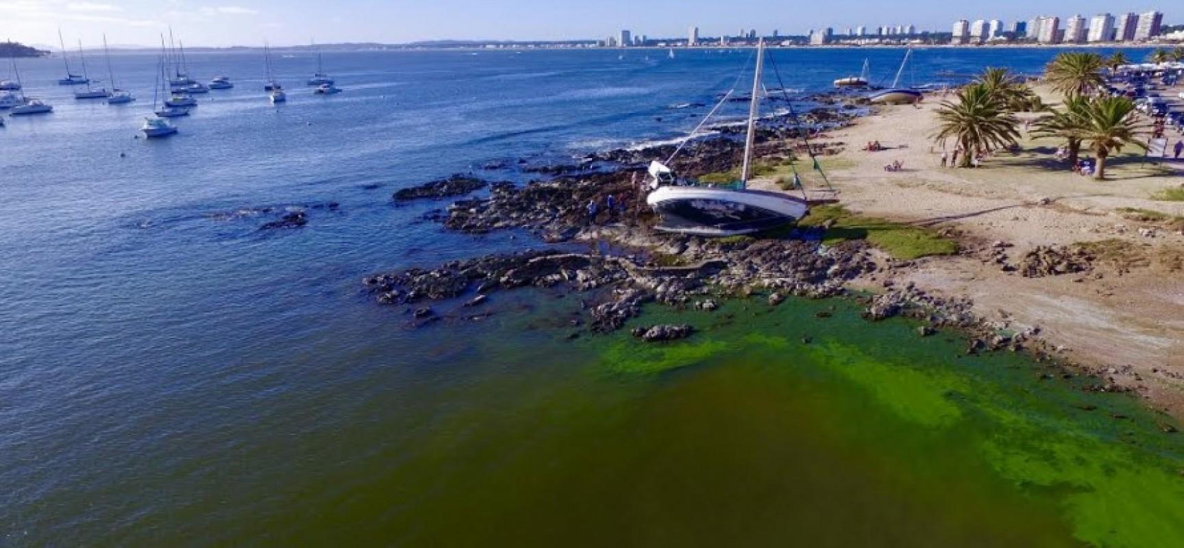 Pese a la presencia de cianobacterias, playas de Punta del Este y Maldonado están habilitadas