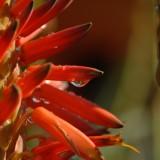 Aloe esteño, cura el cuerpo y el alma